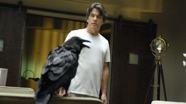 Ворон и мужчина